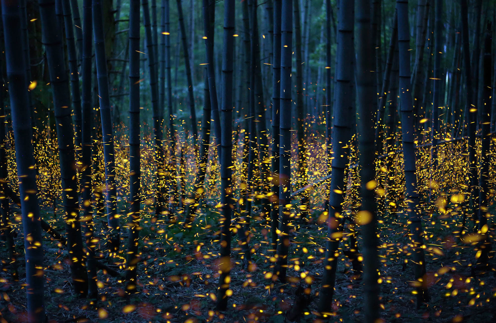 Revoir les lucioles